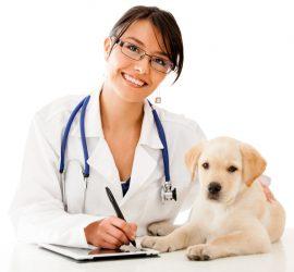 homeopatia-veterinaria