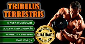tribulus-terrestris-pharmaclinic