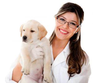 homeopatia veterinaria pet